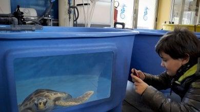 Portici, apre al pubblico il centro per curare le tartarughe marine   foto