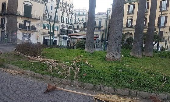 Maltempo e vento forte, cade un albero nel Napoletano: due feriti. Prorogata l'allerta meteo