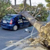 Maltempo, allarme in Campania: cadono alberi, calcinacci e tabelloni pubblicitari