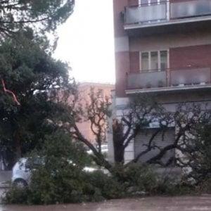 Maltempo, intense nevicate e raffiche di vento in Irpinia e Sannio: caduti alberi e pali della luce