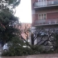 Maltempo, intense nevicate e raffiche di vento in Irpinia e Sannio: caduti alberi e pali...