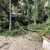 Battipaglia, albero crolla in piazza della Repubblica