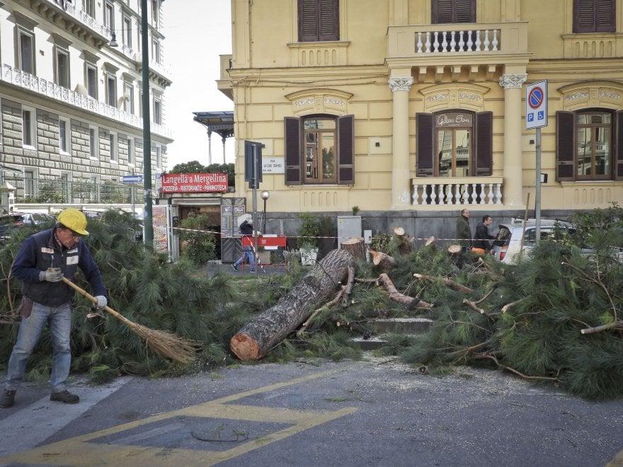 Un albero abbattuto in viale Gramsci