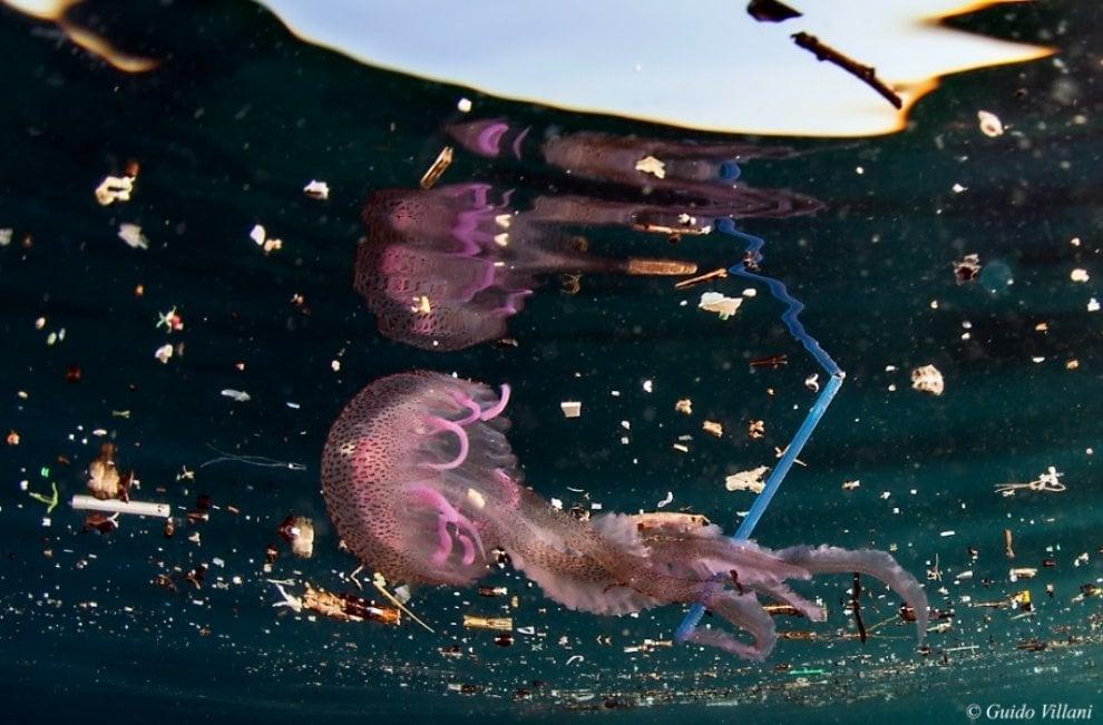La medusa sul salva-slip e la seppia col profilattico:  in mostra a Ischia le interazioni tra organismi e plastica