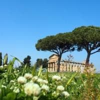Paestum: le iniziative di primavera al parco archeologico