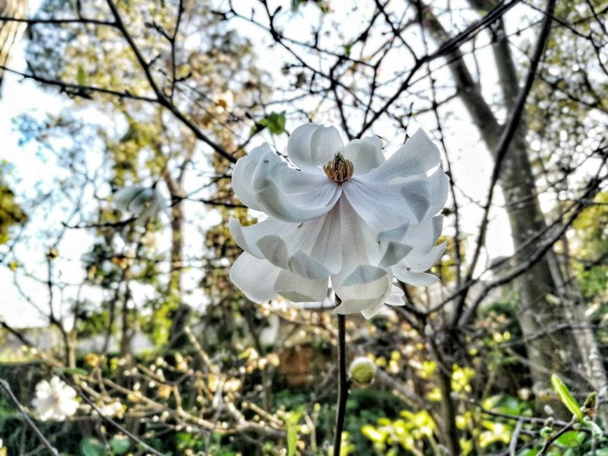 Ischia, tutti i colori della primavera: riaprono i Giardini La Mortella
