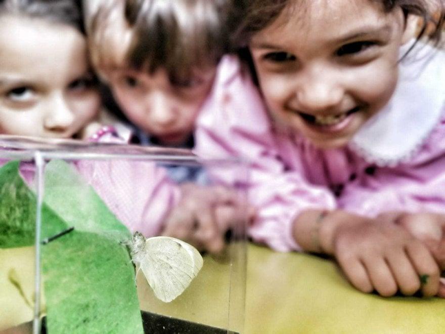 Ischia, la scuola dell'infanzia alleva e libera farfalle