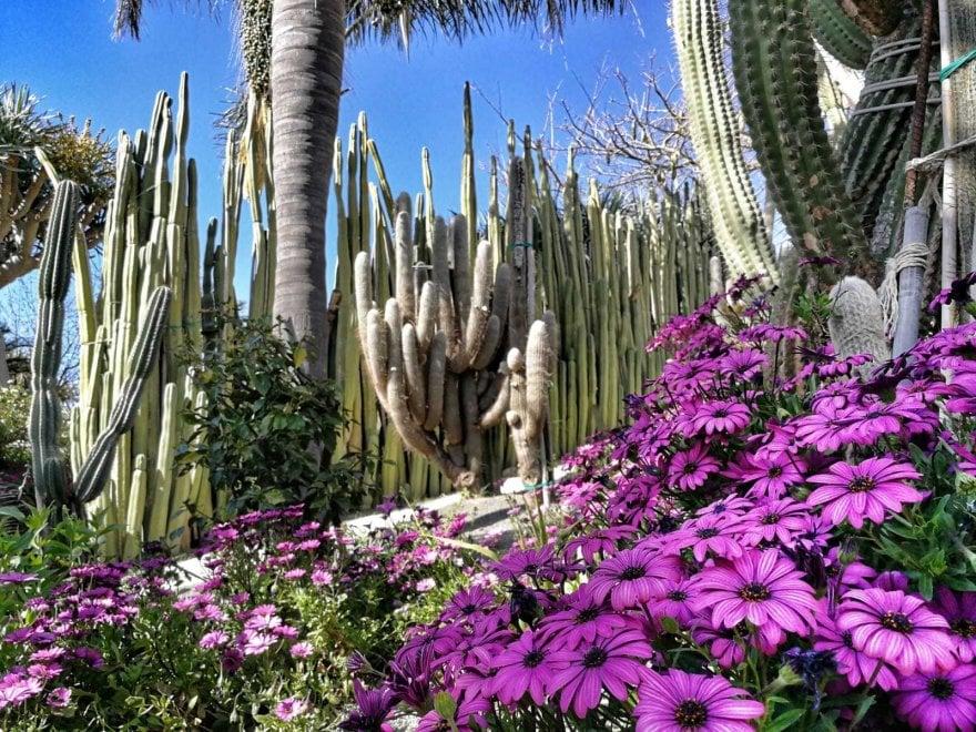 """Ischia, riaprono i Giardini Ravino, """"paradiso"""" delle piante succulente"""