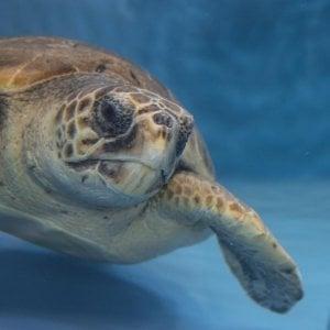 In Cilento un nuovo Marine Turtle Center per le Caretta caretta in difficoltà