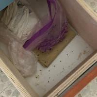 Napoli, escrementi di topo nell'asilo nido: shock a Cavalleggeri