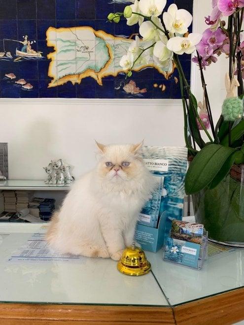 Il nuovo felino dell'hotel Gatto Bianco