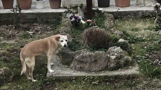 E' morta Nicoletta, cane super fedele: vegliò per dieci anni sulla tomba del proprietario a Ischia