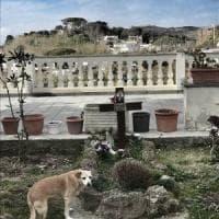 E' morta Nicoletta, cane super fedele: vegliò per dieci anni sulla tomba del proprietario...