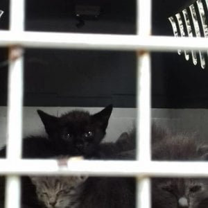 Una città che abbandona i gatti: 4 piccoli in un trasportino ritrovati in Floridiana