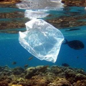 Centola diventa plastic free: stop alla plastica negli stabilimenti balneari