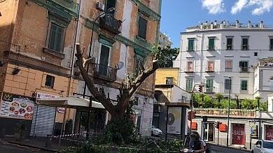 Paura in piazza Mazzini: cade  il ramo di un albero, un ferito
