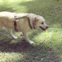 Pet therapy, alla Federico II i cani sono co-terapeuti e vengono premiati