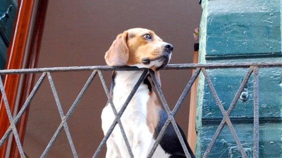 Napoli, cani soli sul balcone: interviene la polizia municipale