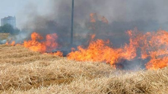 Napoli, allarme incendi, il sindaco vieta di bruciare le sterpaglie
