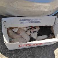 Potenza, la polizia locale salva nove cuccioli gettati in un canalone
