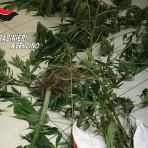 Mirabella eclano, coltivava marijuana: arrestato 60enne