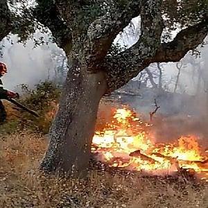 Caserta, feriti due operai antincendio per esplosione di un ordigno bellico nei boschi di Giano Vetusto