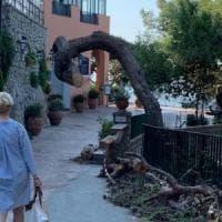 Troppo pericoloso, Capri dice addio al pino storico di via Tragara