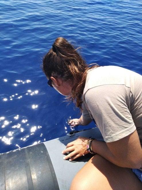 Ascea Marina, i bagnanti salvano una tartarughina appena nata