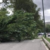 Potenza, tragedia sfiorata: albero cade in viale dell'Unicef
