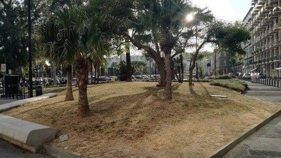 Riviera di Chiaia, aiuole ancora ko: slitta il vertice in Comune