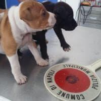 Galleria Umberto: salvi sei cuccioli di cane, ritrovati non microchippati