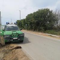 Cilento, lontra morta in strada: investita da un'auto