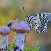 La farfalla, la lumaca e il fungo: il microcosmo lungo il Sele sa di meraviglia