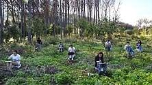 """Il """"funerale"""" della pineta: gli studenti e gli alberi"""