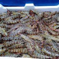 Procida, a Marina Grande la rivincita del pesce povero