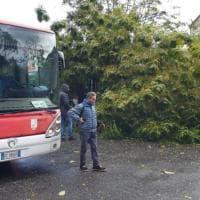 Maltempo, albero si abbatte su un bus per il vento. Autista lievemente ferito