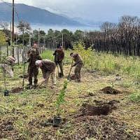 La sfida green di Legambiente, piantati 300 alberi sul Vesuvio