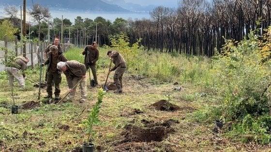 Ambiente: tre milioni di alberi da piantare nel Napoletano