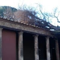 Maltempo, scavi di Pompei: cade un pino nei pressi della Palestra Grande di Pompei