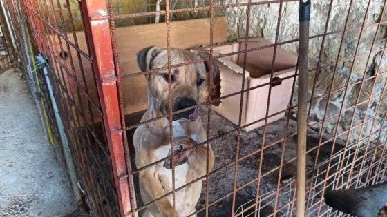 Emigra in Spagna e abbandona il cane in una gabbia: cucciolo salvato dai vigili