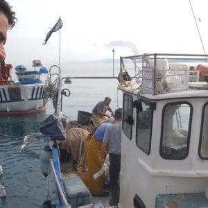 Blockchain, parte da Ischia la rivoluzione della tracciabilità del pescato