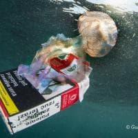 La medusa si aggrappa alle sigarette: la foto simbolo dell'inquinamento nel golfo