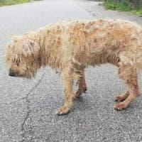 La favola a lieto fine del cane Gennaro: ritrova il proprietario dopo dieci