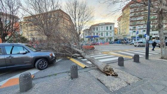 Napoli, allerta meteo, chiuse le scuole. Cadono alberi a Foria e all'Arenaccia