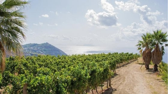 """Ischia, la bellezza dagli scarti del vino: """"Così ridiamo vita alle vinacce"""""""