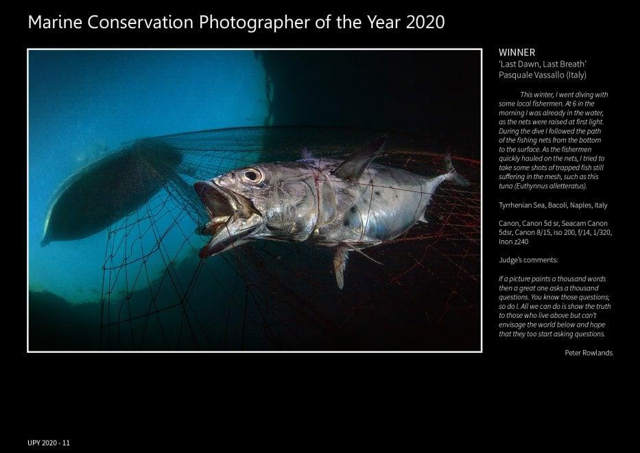 Il polpo con il pallone e il tonno sofferente: il concorso internazionale premia le foto di Vassallo