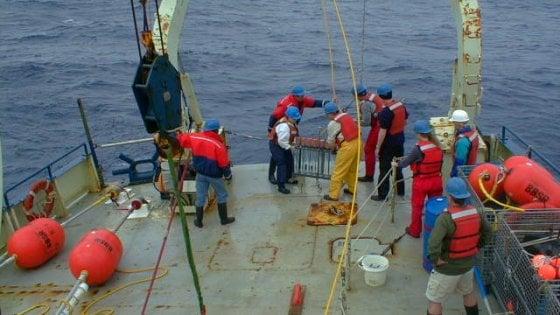 """Nel mare più caldo c'è meno plancton: così il clima """"pazzo"""" impoverisce gli ecosistemi"""