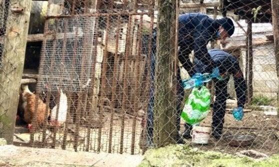 Coronavirus, anziani in quarantena, i carabinieri si prendono cura degli animali