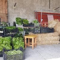 Afragola, la Masseria Ferrajoli regala alimenti e confetture alle famiglie in difficoltà