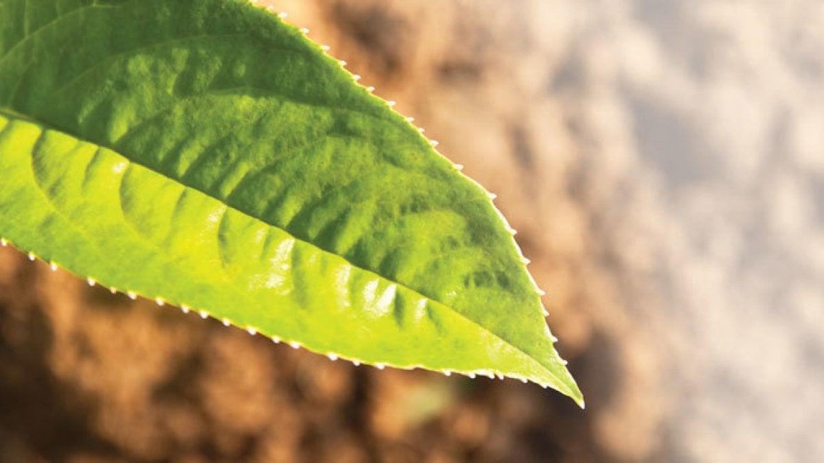 Avversità Delle Piante Coltivate nutrire ma anche proteggere: la rivoluzione nella produzione